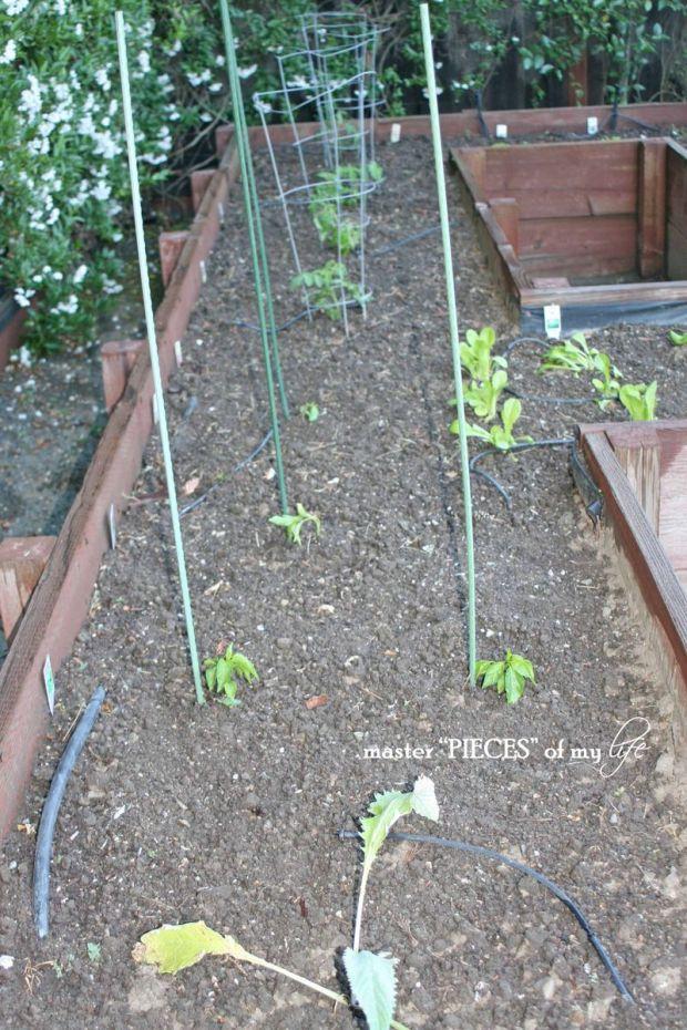 Veggie garden5