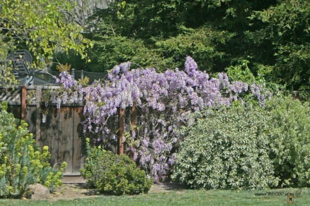 7 happenings spring garden5
