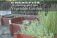 Veggie garden1
