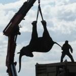 África: Trasladan a 500 elefantes de un parque para protegerlos
