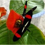 Planta cambia de hojas por defenderse de una mariposa