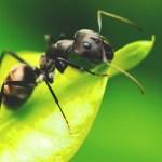 Descubren 57 especies de insectos
