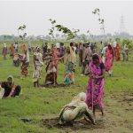 Día histórico en la India: plantan más de 66 millones de árboles en 12 horas