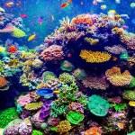 Belice prefiere proteger los corales al petróleo