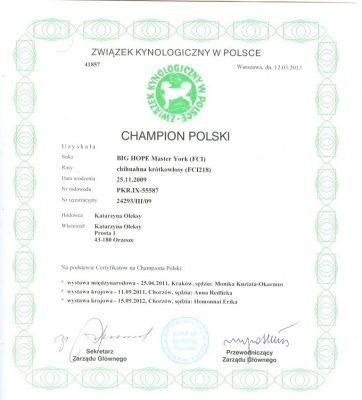 Champion Polski BIG HOPE Master York