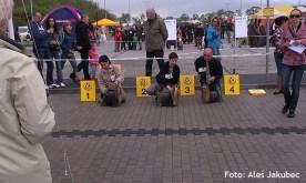 Międzynarodowa Wystawa Opole- Hodowla Master York