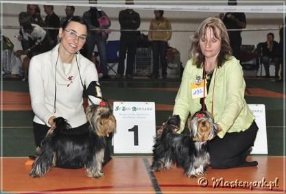 EXTREME EMOTIONS Master York Krajowa Wystawa Terrierów i CT w Raciborzu (Kędzierzyn Koźle)