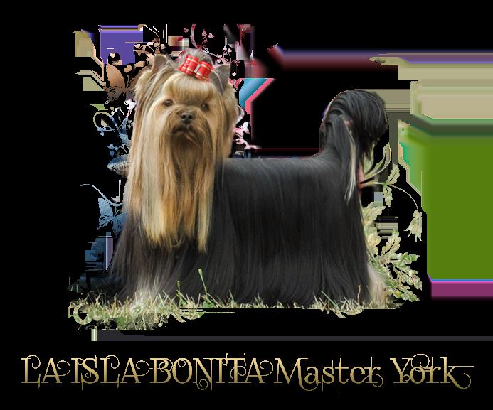 LA ISLA BONITA Master York