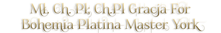 Bohemia Platina Master York