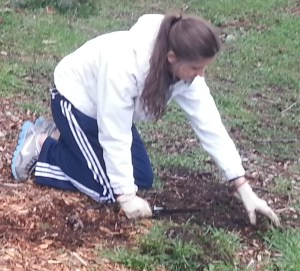 Senior Kelsi Leu digs up weeds during the Habitat Restoration Work Party on the slope behind Ramstad Commons.