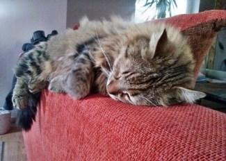 Czesiek śpiący