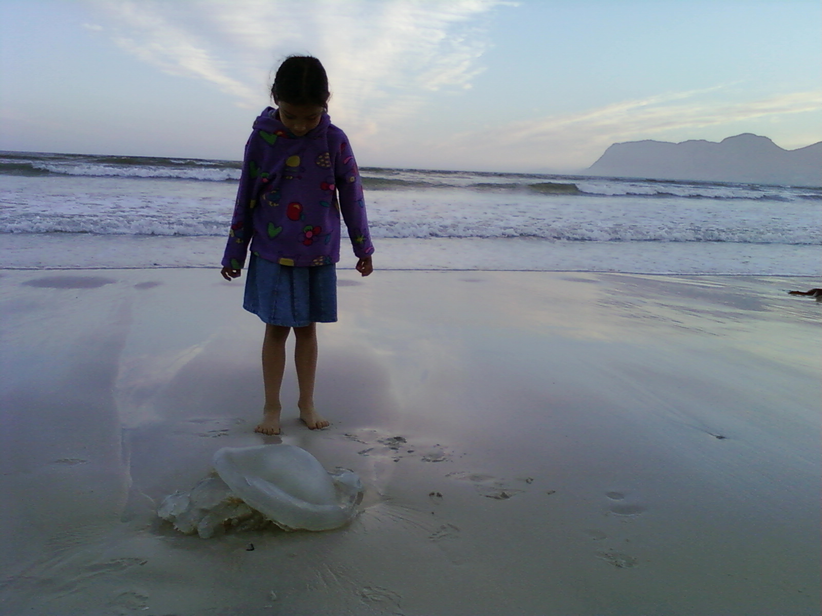 jellyfish on beach