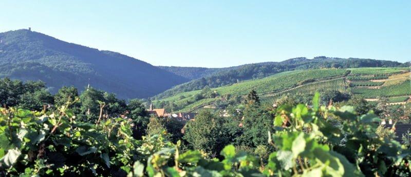 Alsace - hvor mat og vinkultur går hånd i hånd