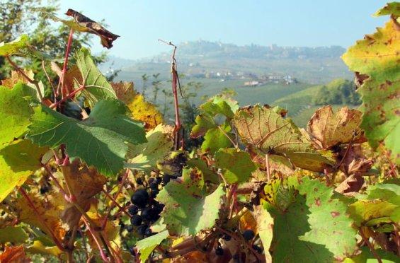 Piemonte og den fjerde B, eller Slow Foods begynnelse