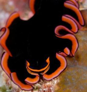 Scuba Dive Kadavu with Matava Resort, Fiji