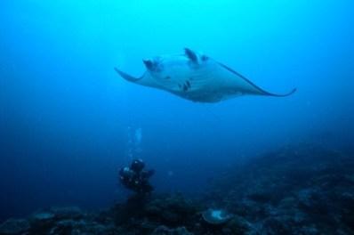 Manta Reef delivers yet again