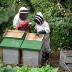 Community Partnership Kadavu Organic Honey Program