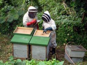 Community Partnership Kadavu Organic Honey Program, Fiji