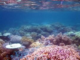 Snorkeling in front of Matava Resort