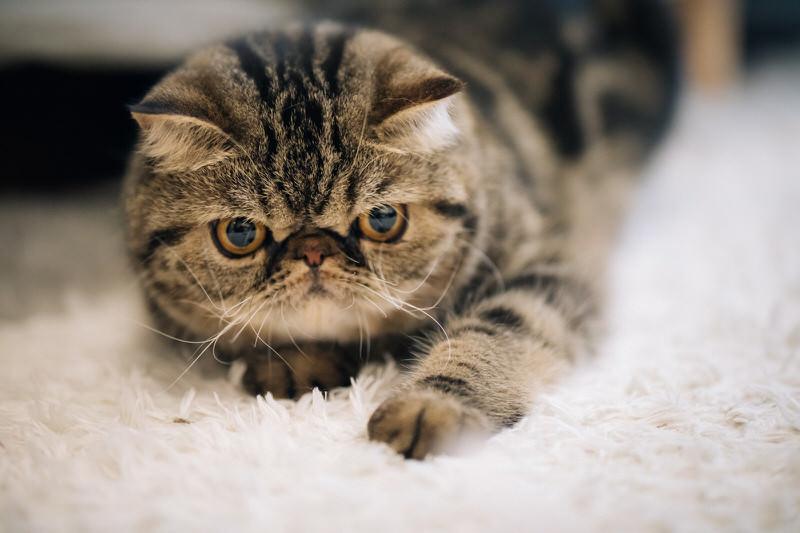ぶちゃいくな猫ちゃん