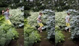 Amazing kid science's lab garden 15
