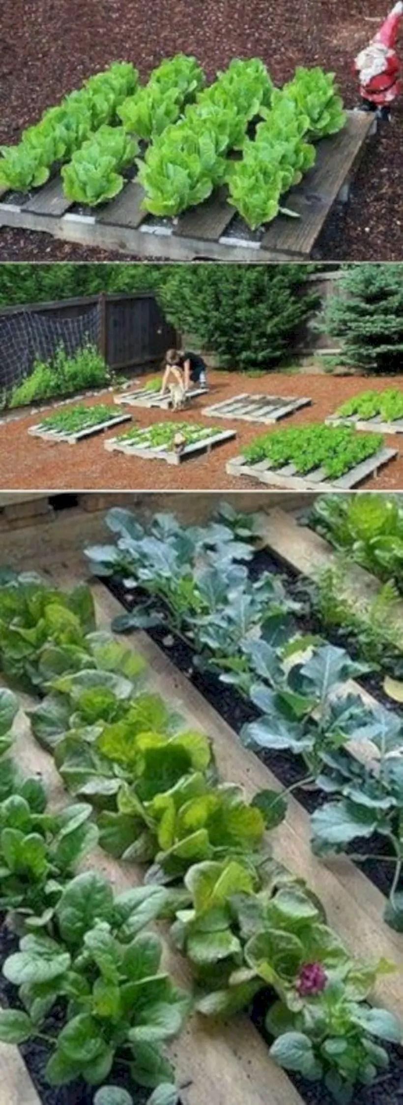 Wooden pallets and little vegetables garden