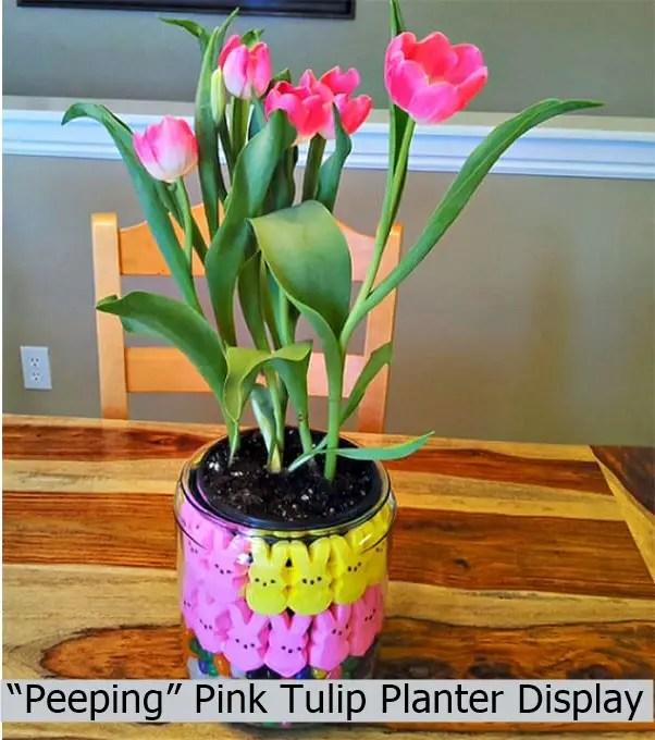 """""""peeping"""" pink tulip planter display"""