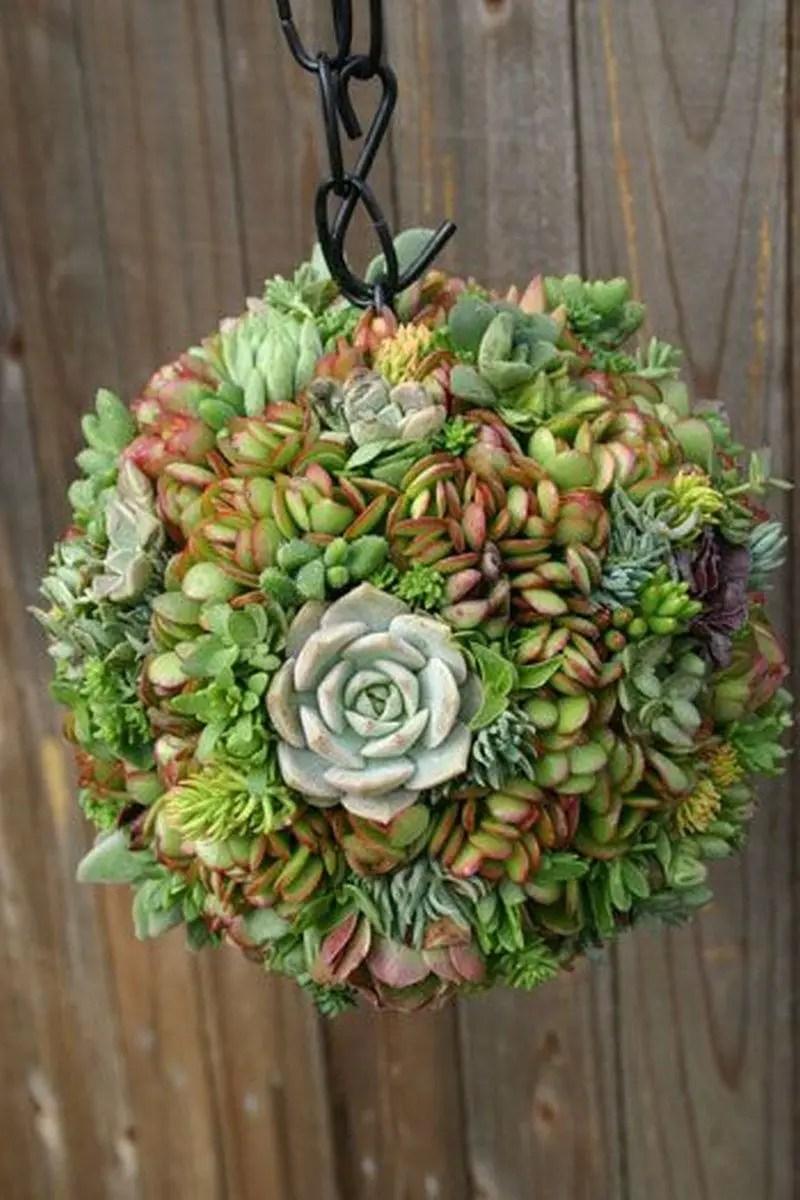 Diy succulents 5
