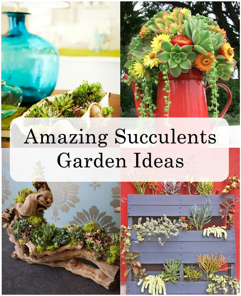 Succulent Gardens Quickly Become A Fast Growing Craze. It Is Not Surprising  To See How You Can Add Succulents And Grow Them Beautifully In Almost All  ...