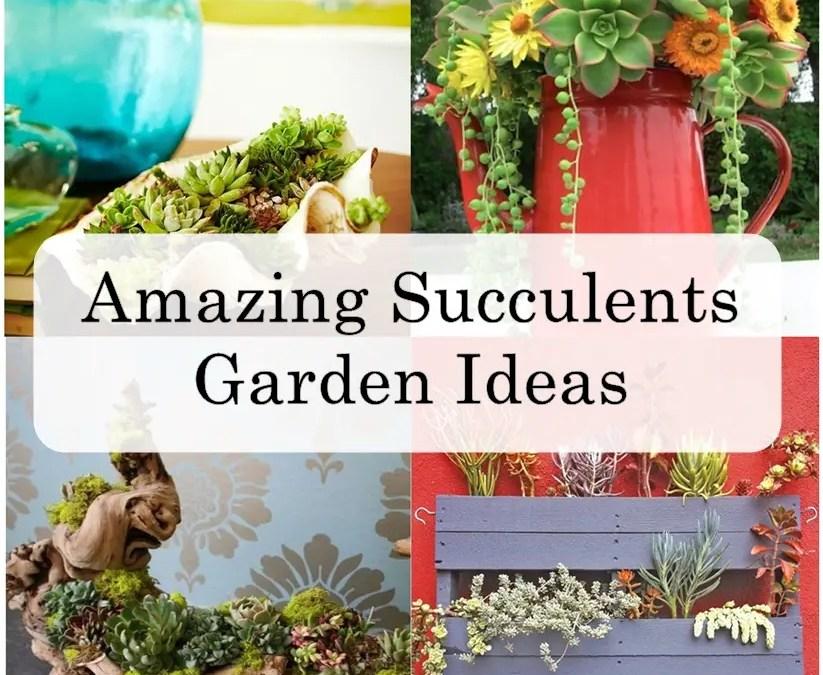 Amazing Succulent Garden Ideas