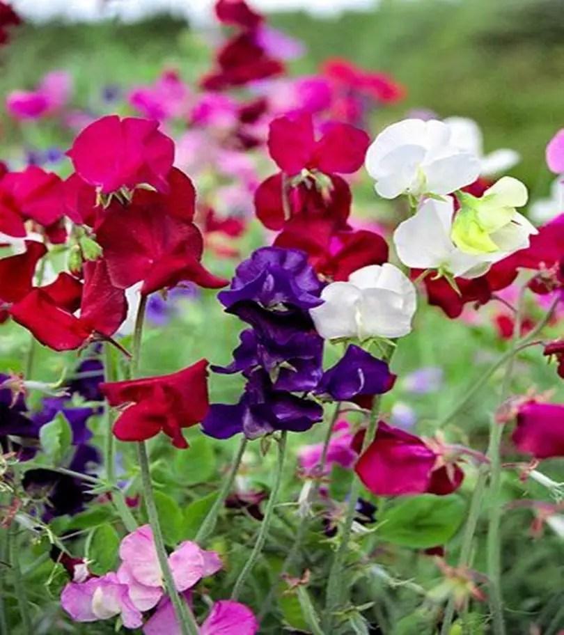 Fragrant flower 8