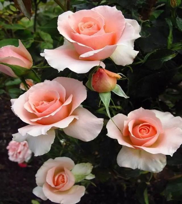 Fragrant flower 9