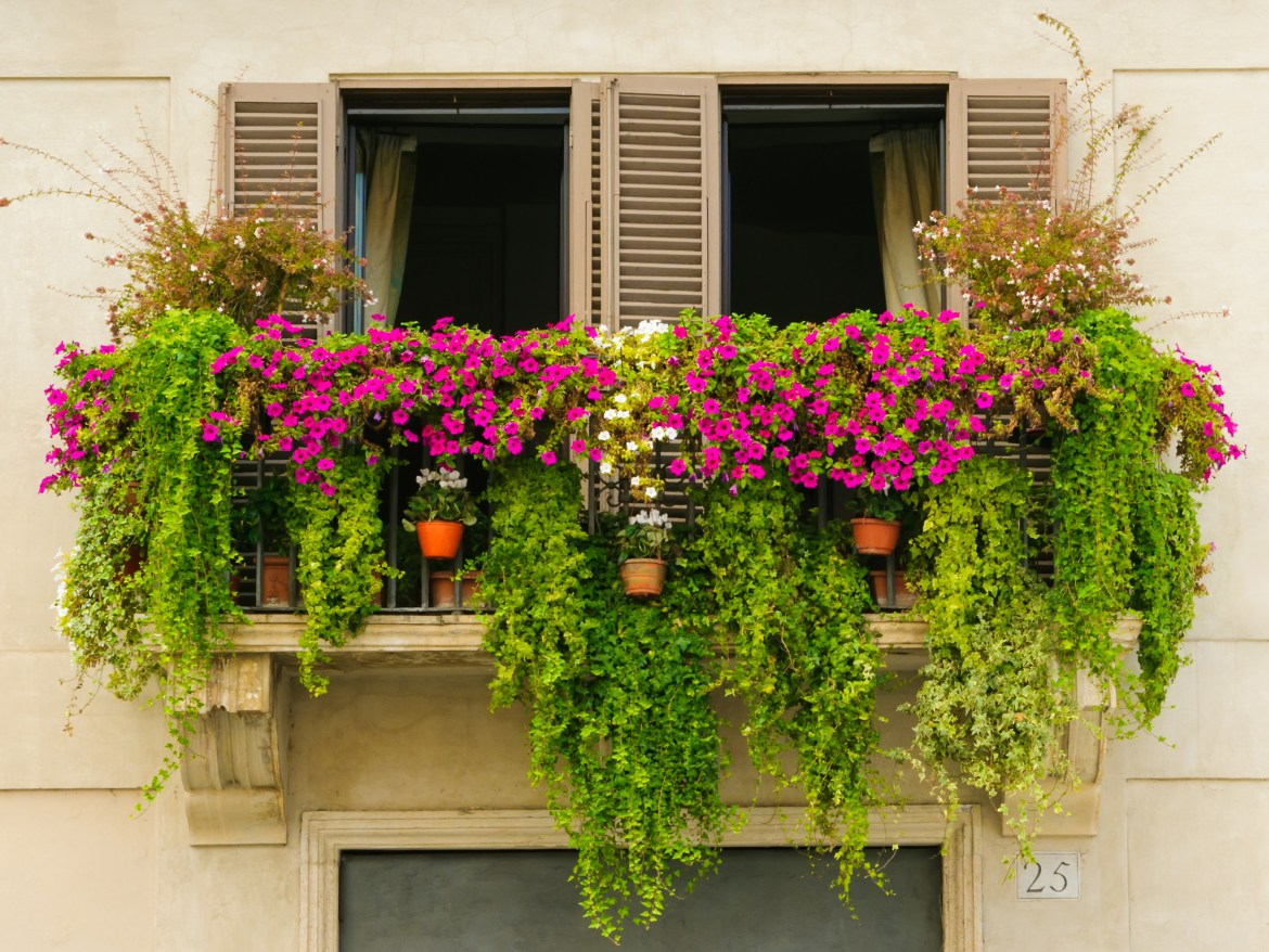 Grow your plants in containers