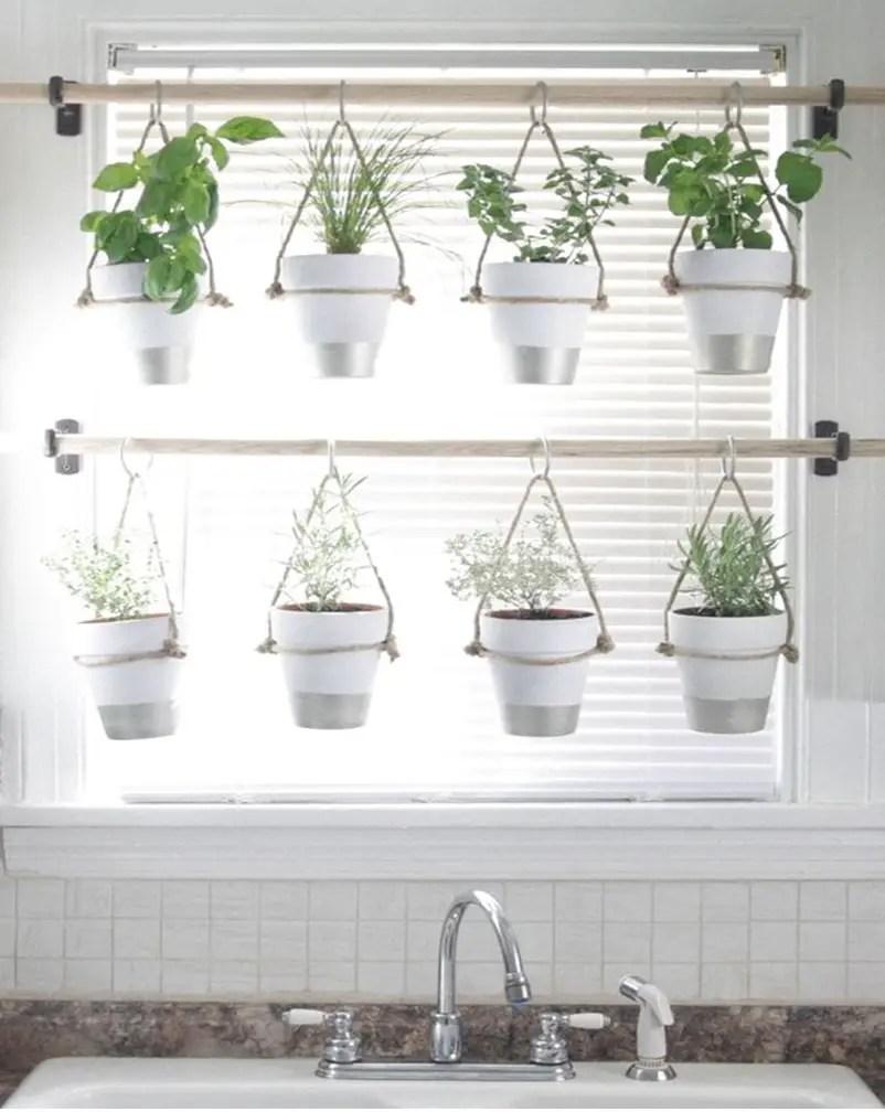 Kitchen herbs garden 1