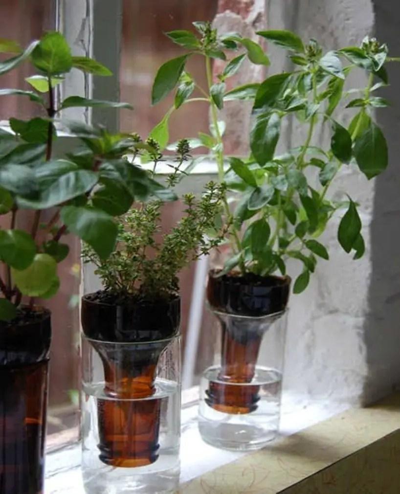 Kitchen herbs garden 11