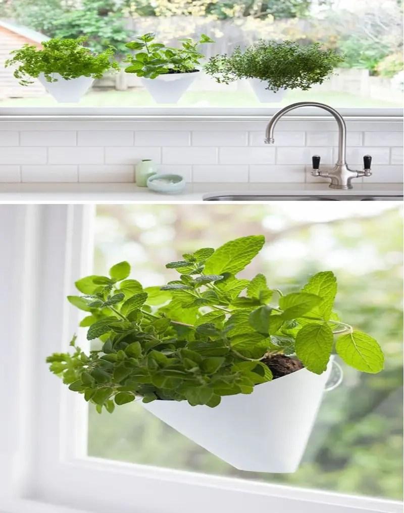 Kitchen herbs garden 3