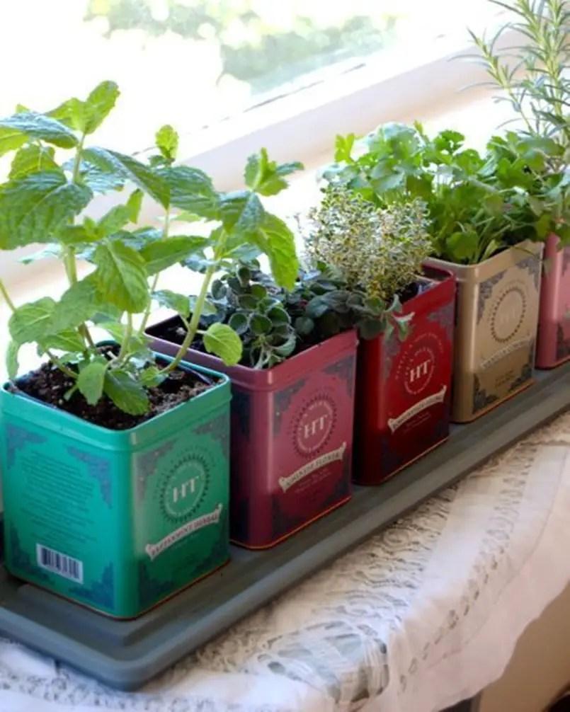 Kitchen herbs garden 5