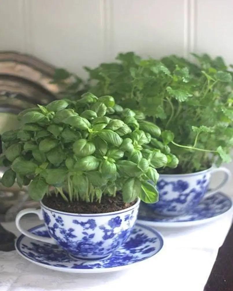 Kitchen herbs garden 6