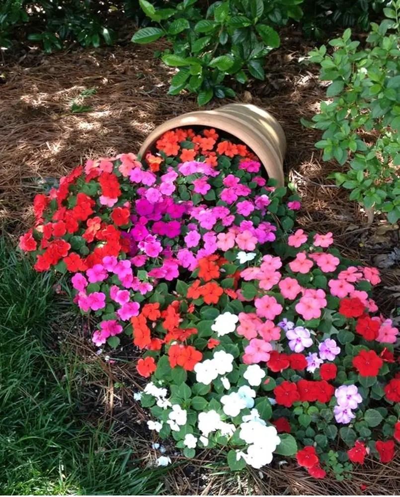 Petunia garden 1