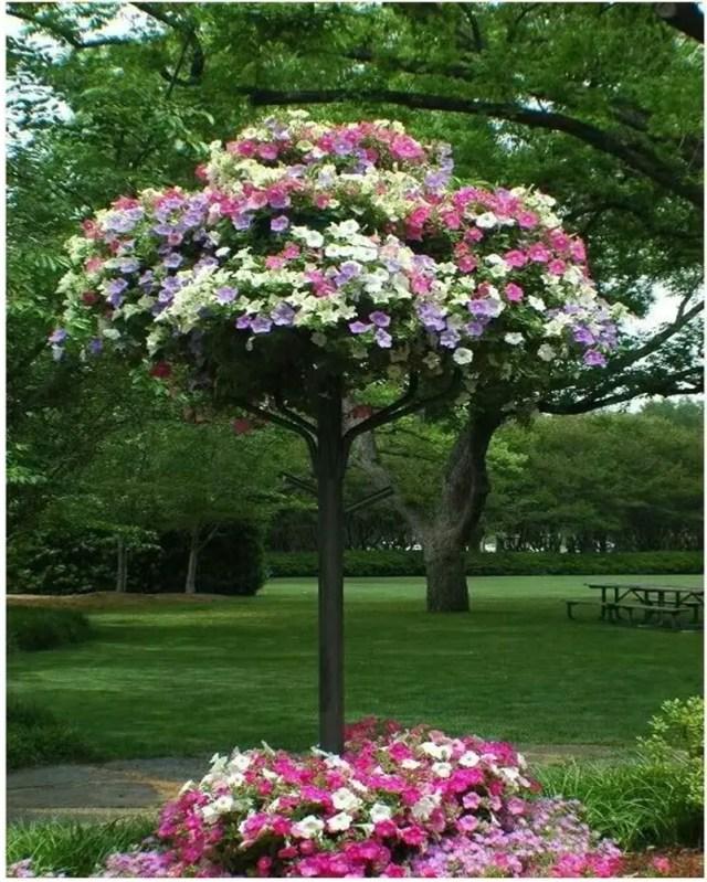 Petunia garden 10