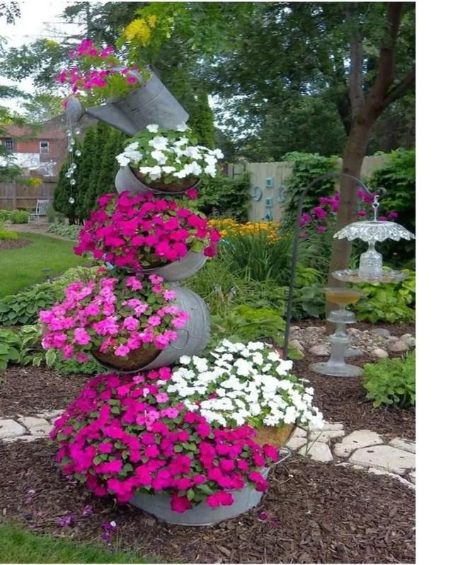 Petunia garden 3