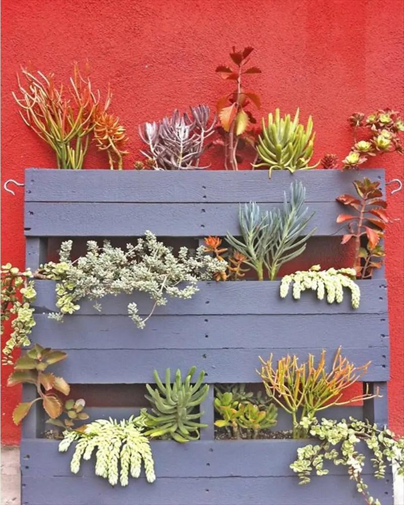 Succulents garden ideas 10