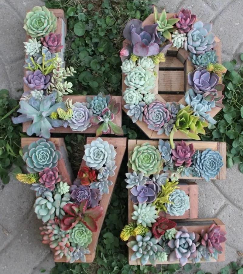 Succulents garden ideas 5
