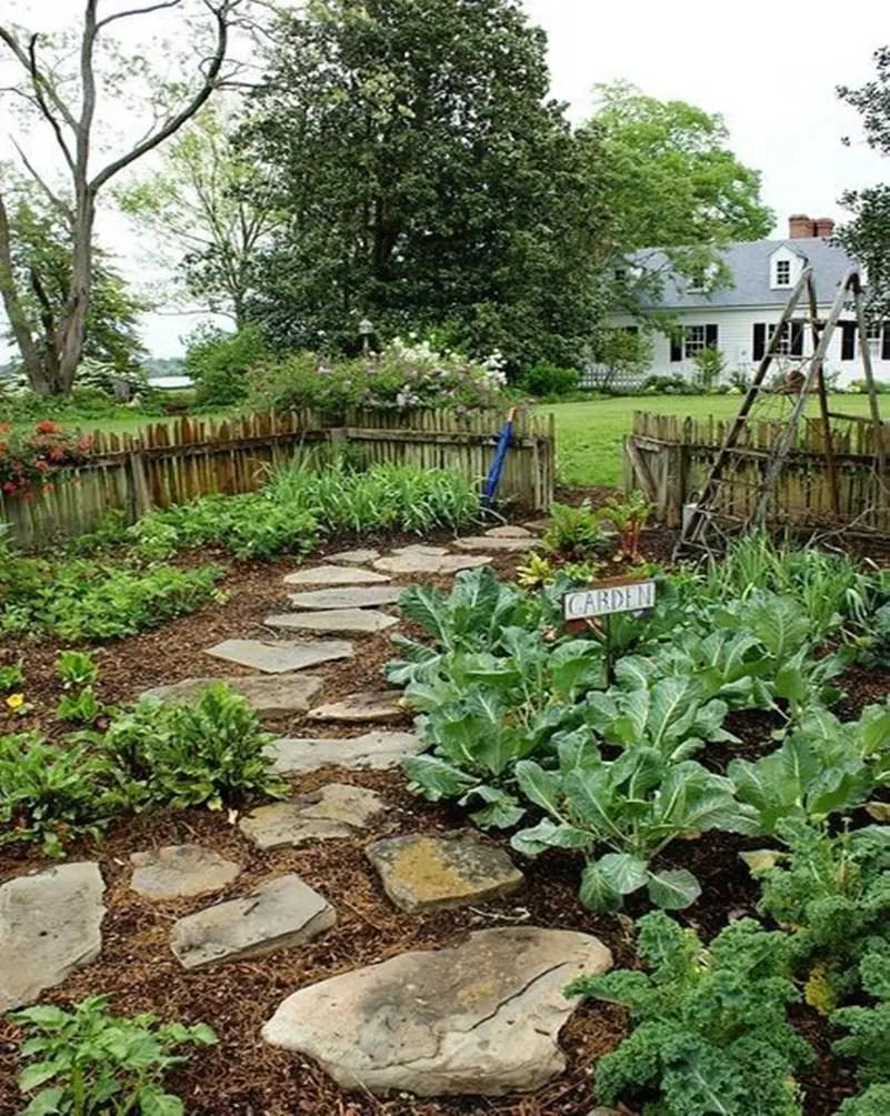 Vegetable garden 4