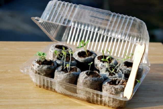 Mini-greenhouse-from-recyclable-plastic-container