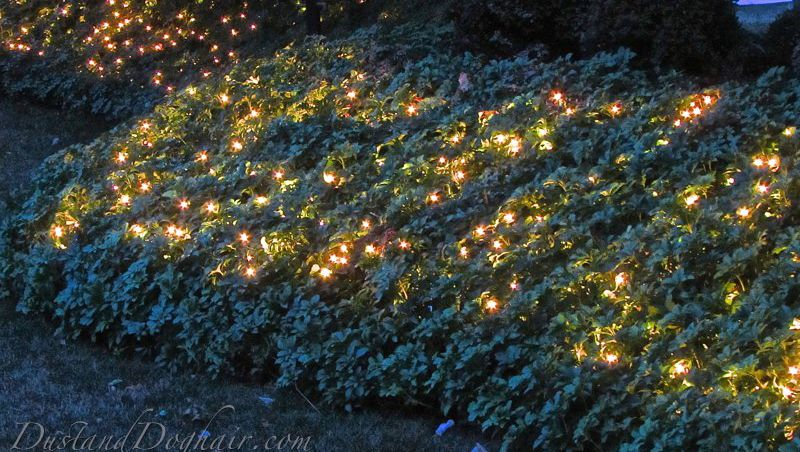 Garden lighting magical ground
