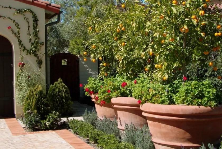 Large pots and plants