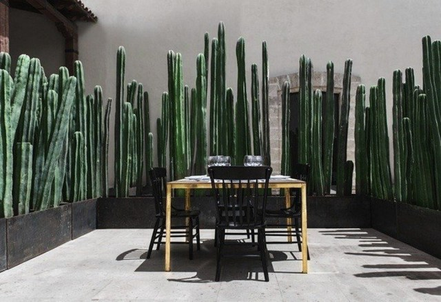 Cactus living fence