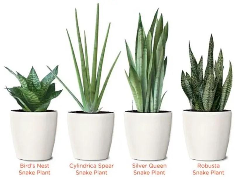 Bedroom plants 1