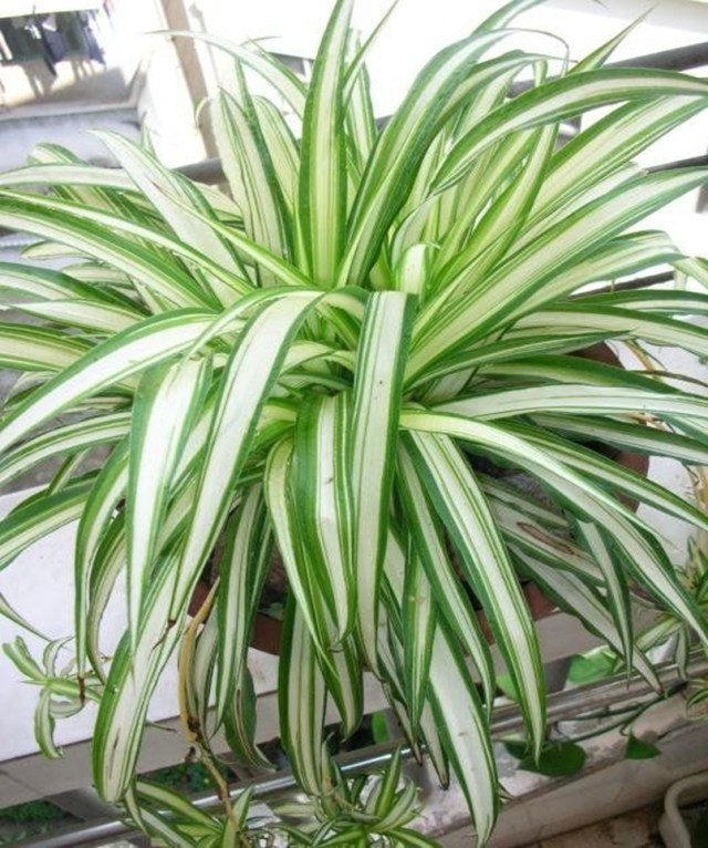Bedroom plants 4